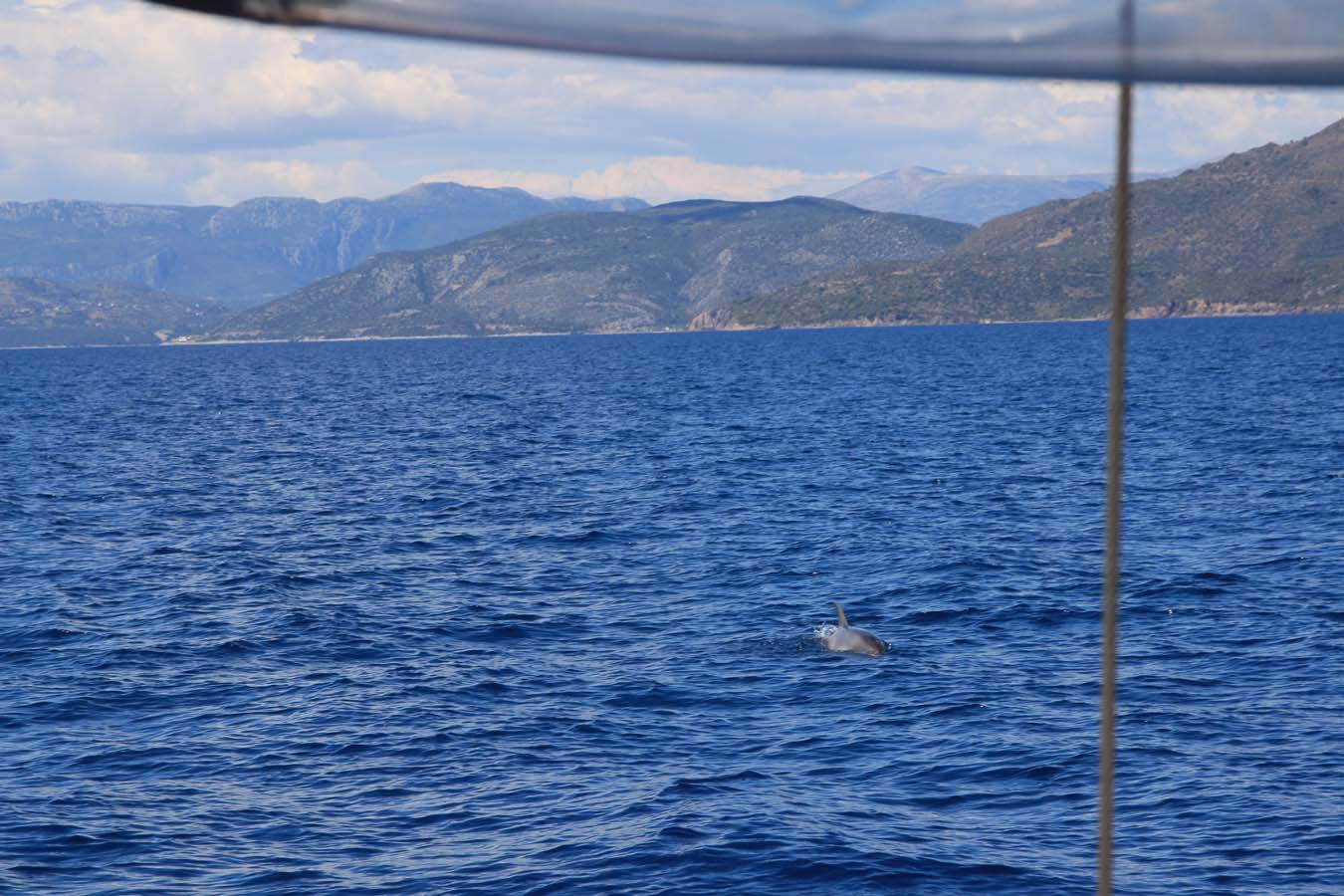 Sailing in Greece. Dolphins Spotting.