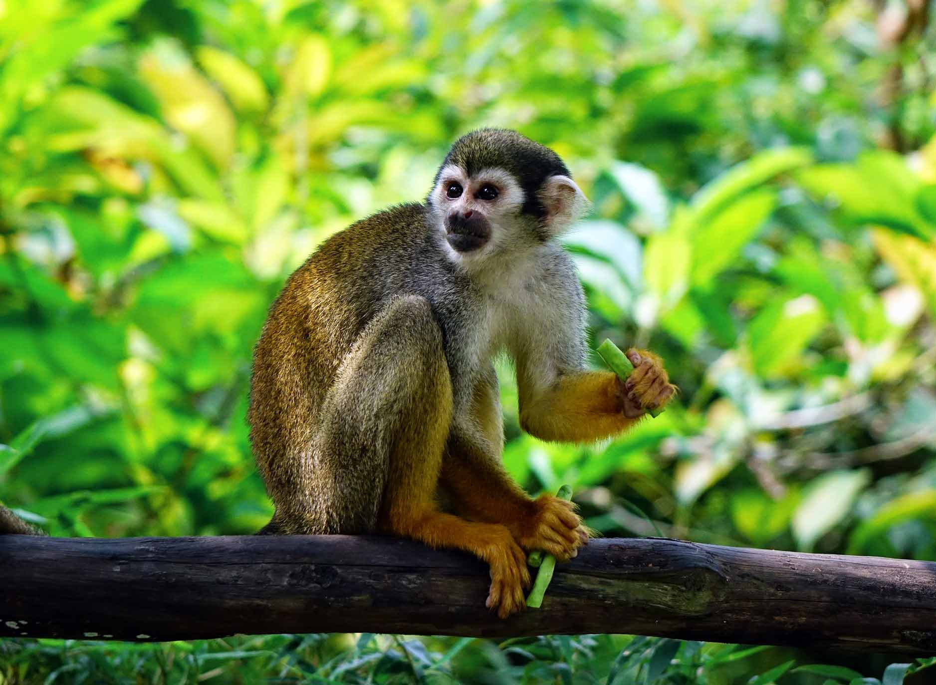 Monkey o a tree eating, Thailand, Cultural Differences