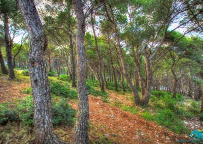 telascica-park-on-the-way-to-the-cliffs-900