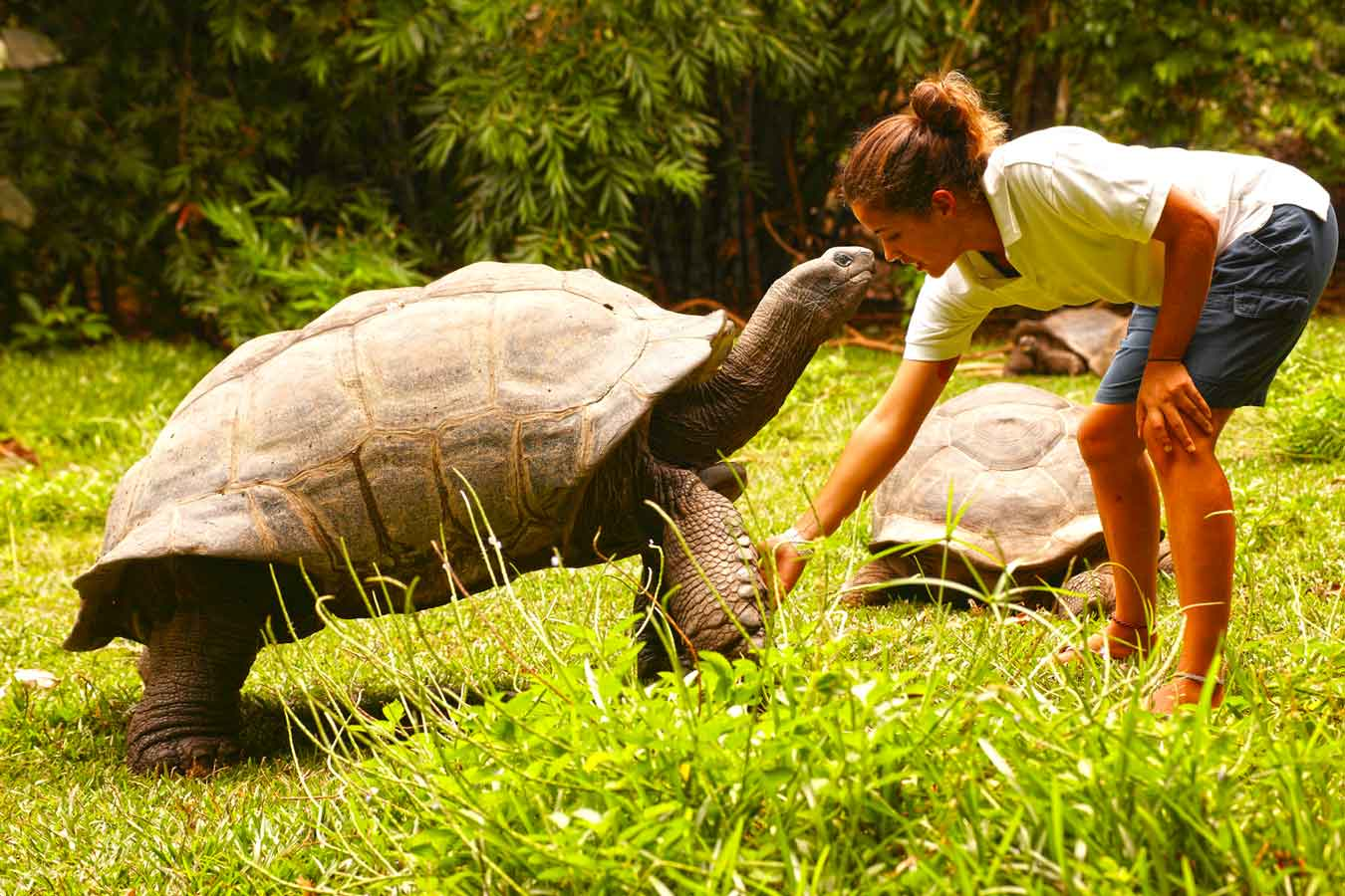 Curieuse Island Seychelles, Giant Tortoise, Girl, Nature Reserve