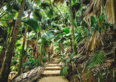 Rainforest walk in Valee De Mai, Garden Of Eden, Seychelles