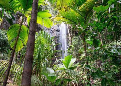 Waterfall, Rainforest walk in Valee De Mai, Garden Of Eden, Seychelles