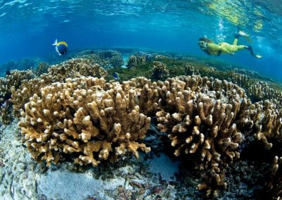 Coral Reef at Coco Island